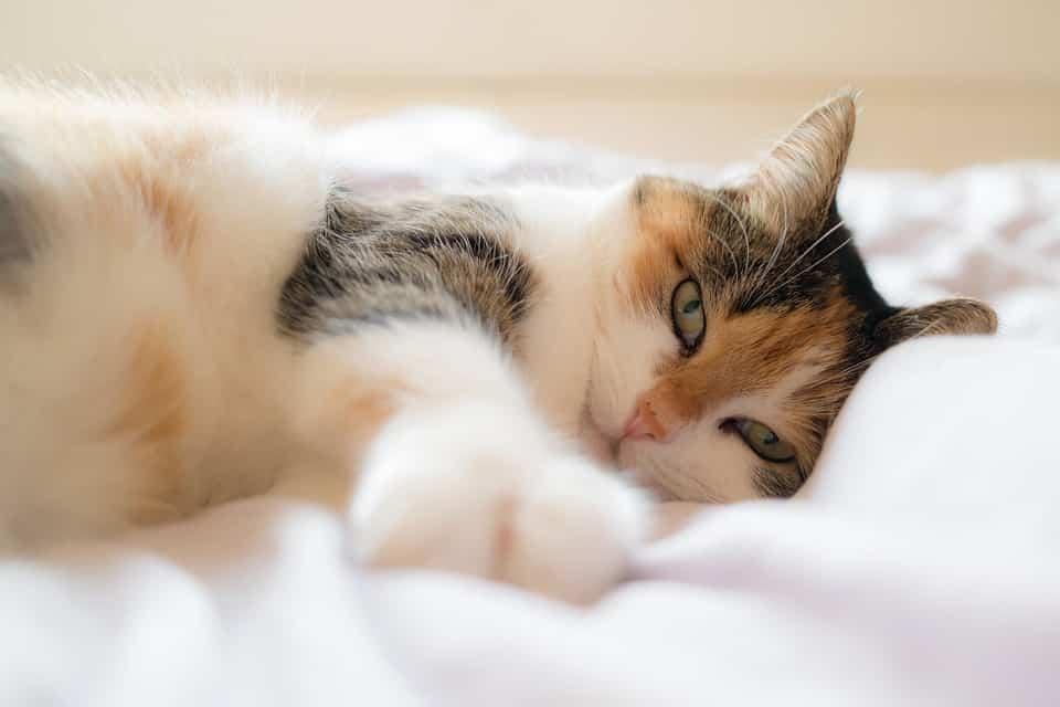 La ronronthérapie ou l'art de se détendre grâce aux chats